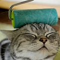 【可愛的貓貓】貓貓舒服的表情