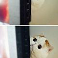 【紅小胖Snoopy】網友迷上萌加菲貓♥