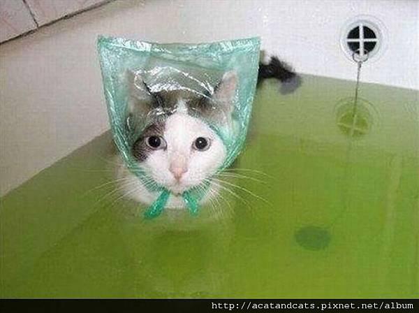 【可愛的貓貓】這是農婦貓貓?