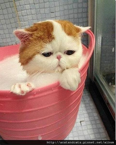 【可愛的貓貓】放我出去阿