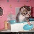 【可愛的貓貓】你想要幹嘛?