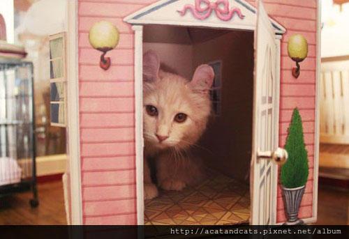 造型《喵喵屋》~歡迎參觀我的家!喵~=θωθ=
