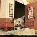 【可愛的貓貓】造型《喵喵屋》~歡迎參觀我的家!喵~=θωθ=