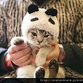 【可愛的貓貓】貓咪角色扮演大集合來了!