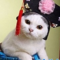 【可愛的貓貓】kitty凱蒂喵♥超萌
