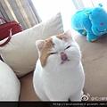 【紅小胖Snoopy】網友迷上加菲貓♥