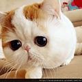 加菲貓紅小胖
