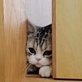 【可愛的貓貓】貓貓心事誰人知