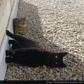 【可愛的貓貓】貓貓愛搞怪!