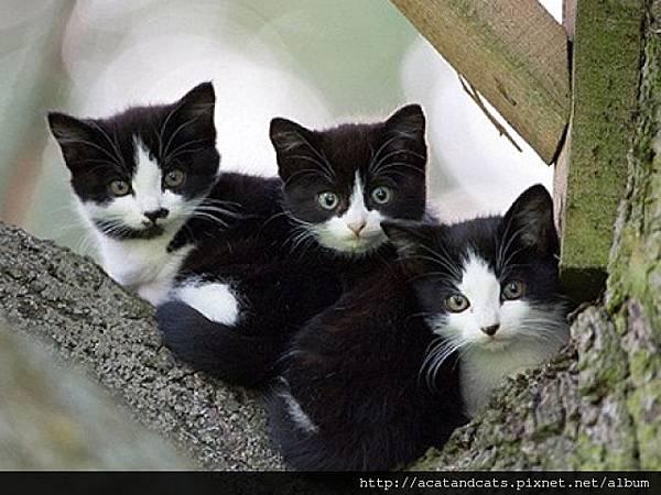 【可愛的貓貓】貓占鳥巢?!貓頭鷹家變貓窩 不受狐狸騷擾且溫暖