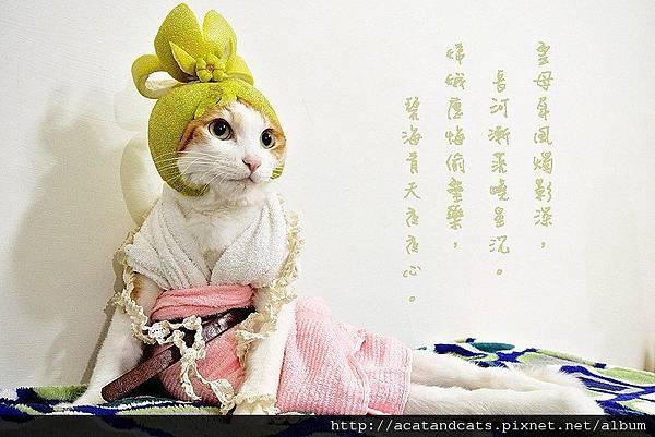 【可愛的貓貓】中秋限定嫦娥喵~~嫦娥幫我簽名!!