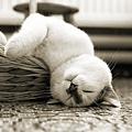【可愛的貓貓】唯美的萌系貓咪美圖