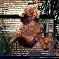 【可愛的貓貓】偷魚不著一身濕的貓貓