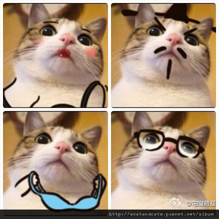 【可愛的貓貓】貓貓萌言萌語~