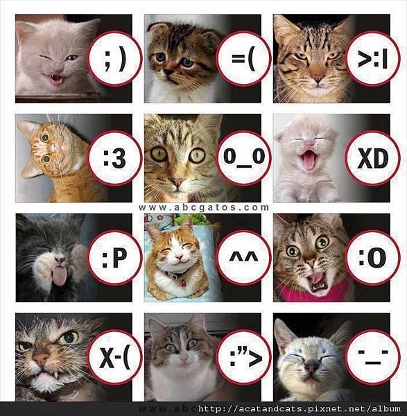 【可愛的貓貓】百變貓貓兒~