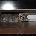 【可愛的貓貓】喵爺 喵娘娘...果然有個性.....