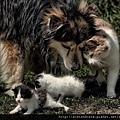 【可愛的貓貓】誰說貓狗不兩立?