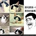 【可愛的貓貓】超萌大眼可愛貓