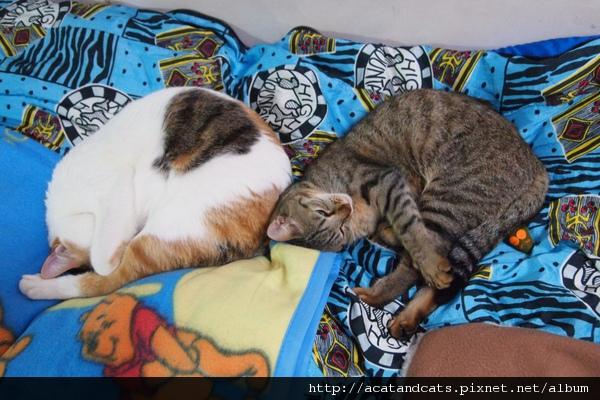 【可愛的貓貓】幸福,其實很簡單!