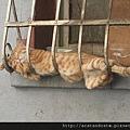 【可愛的貓貓】貓貓愛搞笑