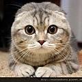 【可愛的貓貓】可愛超萌貓,你擋得住嗎?