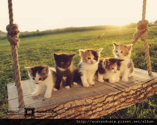 【可愛的貓貓】唯美可愛貓又來囉~