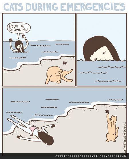【可愛的貓貓】這就是貓跟狗不同之處