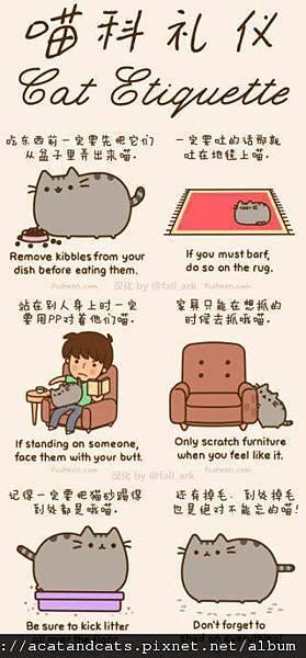 【可愛的貓貓】愛貓的你不可不知