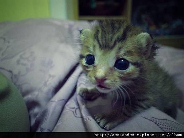 【可愛的貓貓】貓認養-請大家發揮愛心踴躍分享