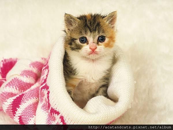 【可愛的貓貓】這到底是什麼呢?是被子嗎?大家猜猜看