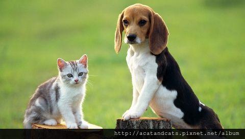 【可愛的貓貓】站站看~看誰站的高?