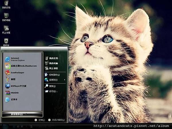 【可愛的貓貓】祈禱的貓咪最可愛