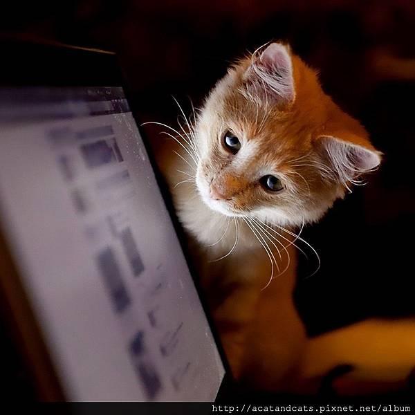 【可愛的貓貓】侯~偷上網路被我發現了吧