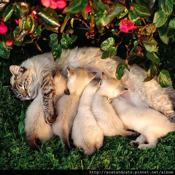 【可愛的貓貓】媽媽瘦了寶寶胖,嬤嬤偉大的愛