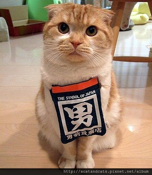 【可愛的貓貓】你好,歡迎光臨