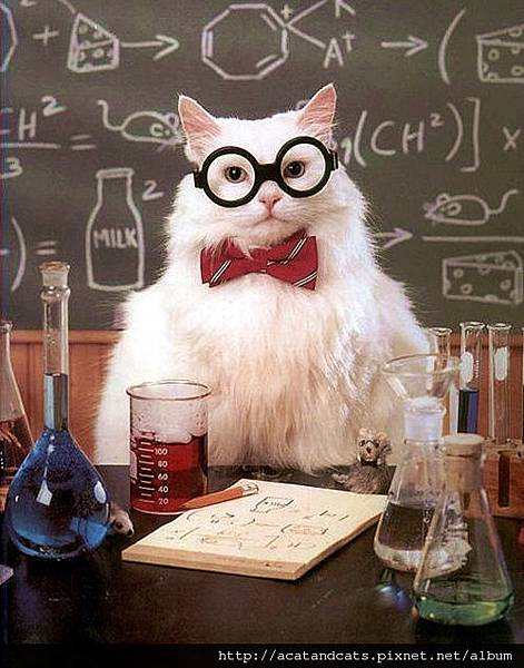【可愛的貓貓】貓博士教大家上化學課囉!