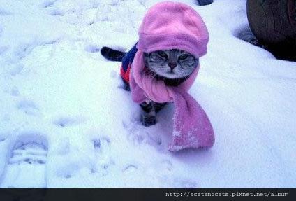 【可愛的貓貓】天氣漸漸冷了~大家出門要多帶件衣服哦 (。◕‿-。)