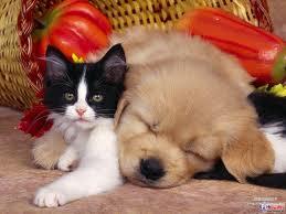 【可愛的貓貓】狗狗躺在貓貓身上~好舒服喔
