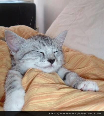 【可愛的貓貓】寒冷天,睡覺天!