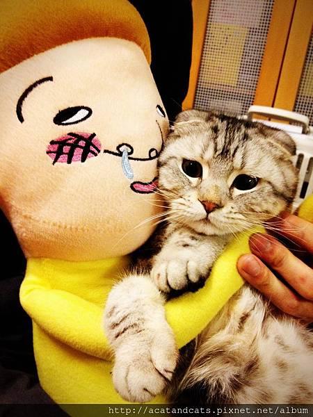 【可愛的貓貓】救命阿~~放我下來!