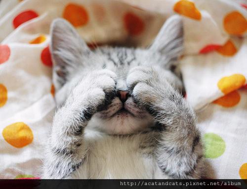 【可愛貓咪】《貓遮眼》超可愛貓咪睡姿~