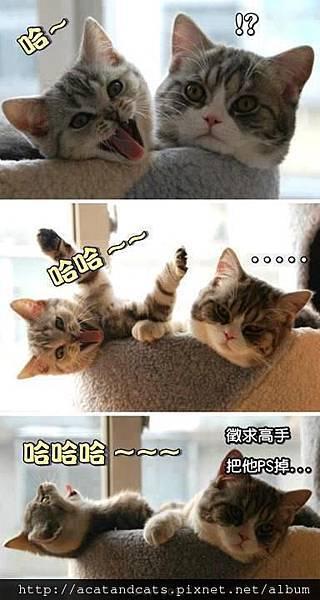 【可愛的貓貓】超可愛~~