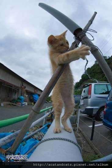 【可愛的貓貓】現在什麼工作也不好做了~~