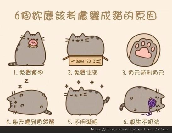 【可愛貓貓】六個你應該考慮變成貓的原因