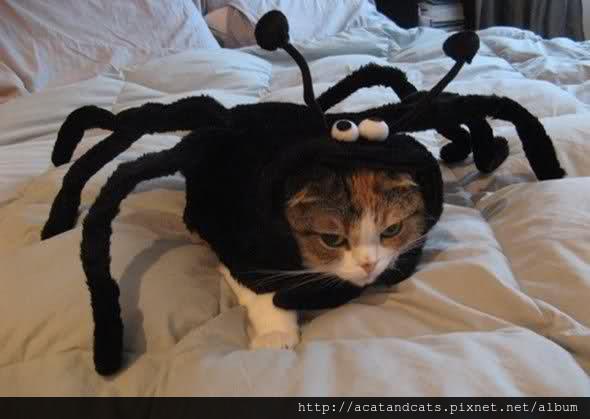 【可愛的貓貓】可以不要一直讓我穿奇怪的衣服嗎 很奇怪耶你