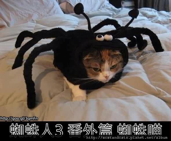 【可愛的貓貓】超想看這一集的!!!