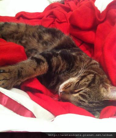 羅里(Rory) 曾經是一隻身心受傷,有攻擊傾向的貓。