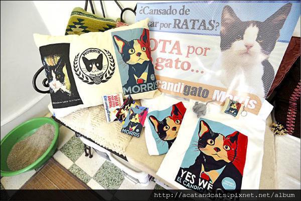 【可愛的貓貓】墨人諷政客貪懶 推貓咪選市長