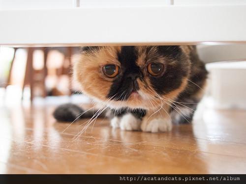 貓咪剛到新環境都會緊張,利用費洛蒙可幫助他放鬆心情,更快適應新環境