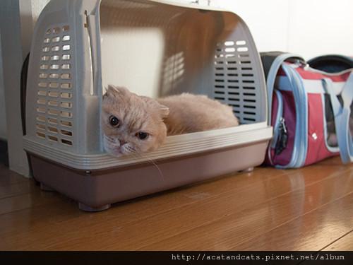 運輸籠上最好再蓋上一塊遮光布,讓貓咪待在裡頭有安全感